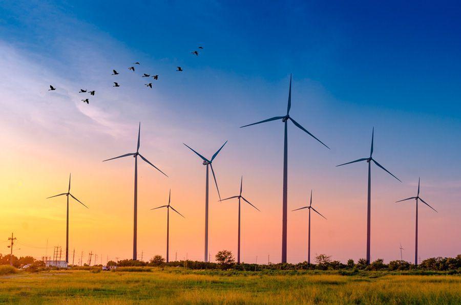 campo eólico sostenible