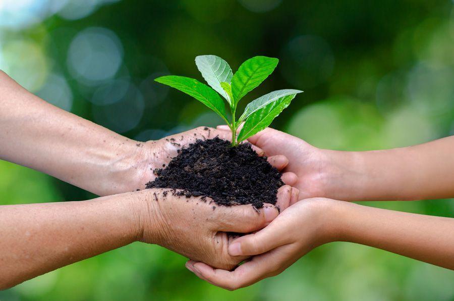 plantas en desarrollo sostenible